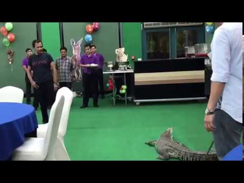 SULTAN OF BRUNEI dares CROC BOY DIONY to put his hand in CROCODILE MOUTH