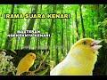 Pancingan Kenari Cengkok Mewah Cara Masteran Kenari Jadi Nembak Rapet Gacor Ngeroll Jernih  Mp3 - Mp4 Download