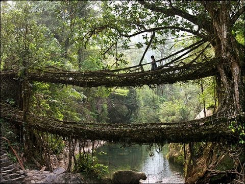 Living Root bridges of Cherrapunji, India HD 2014 HD