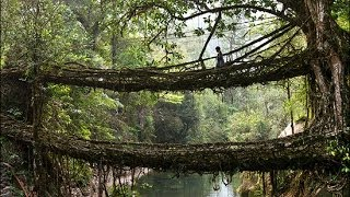 Living Root bridges of Cherrapunji, India HD 2014