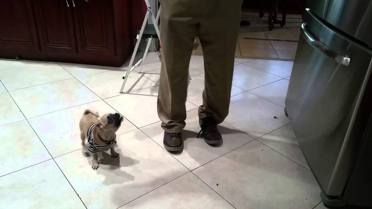 Funny dog dancing - YouTube