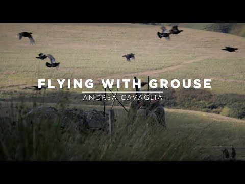Flying with Grouse | Full Film - Withfield Estate