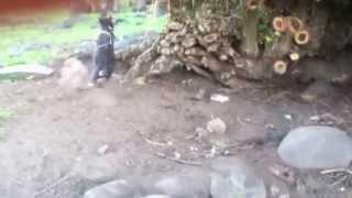 Alamagan Island Dogs