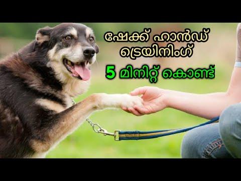 dog training : Shakehand Malayalam : kerala dog training : വളര്ത്തു നായയെ പരിശീലിപ്പിക്കാം