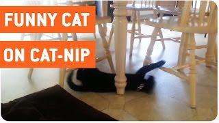 Cat Goes Nuts After Cat Nip | Cat Trip