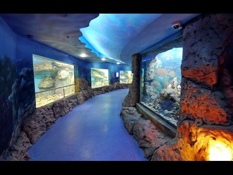 московский океанариум на вднх фото