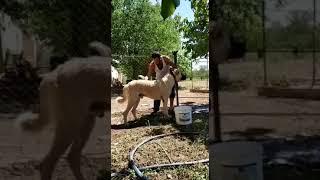 Köpeklerin Banyo Zamanı (Yunus Emre Kılıç)