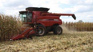 case ih 8240 combines shelling corn