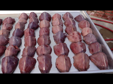 DOVE HUNT CLEAN AND COOK
