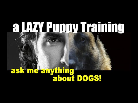 My 11 Month Old German Shepherd Puppy Gets Bored During Training - Puppy Dog Training Video