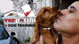 Tarçın'ın Pozitif Köpek Eğitimi - Çeşme - thumbnail
