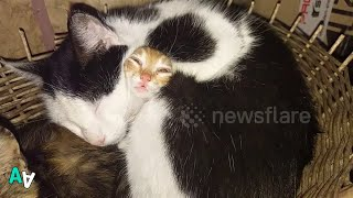 Charming Kitten Pulls Funny Face While Napping