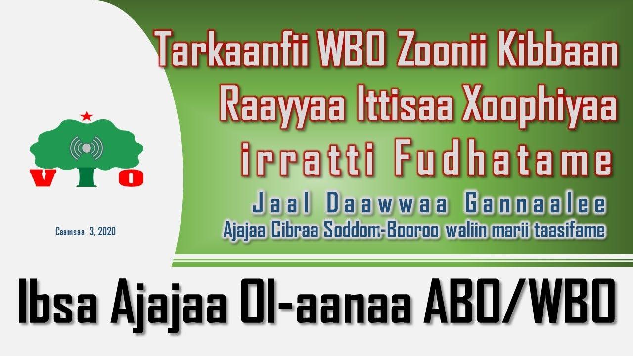 Marii Ajajaa Cibraa Soddom-Booroo, Jaal Daawwaa Gannaalee waliin › Tarkaanfii WBO Z/Kibbaa