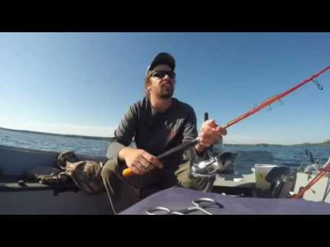 Rod Review For Carrot Stix Wild Orange Rods