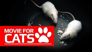 MOVIE FOR CATS - 🐭 WHITE RATS (ENTERTAINMENT VIDEOS FOR CATS TO WATCH)