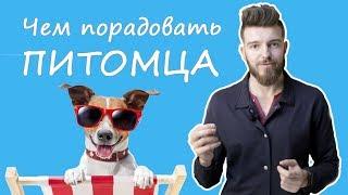 Как порадовать собаку?