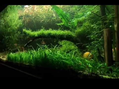 Aqua nova dise o y montaje de acuarios youtube for Disenos de acuarios