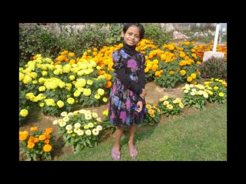 Cute Flowers from Digha, in the Hotel and Amarabati Garden   Digha, West Bengal