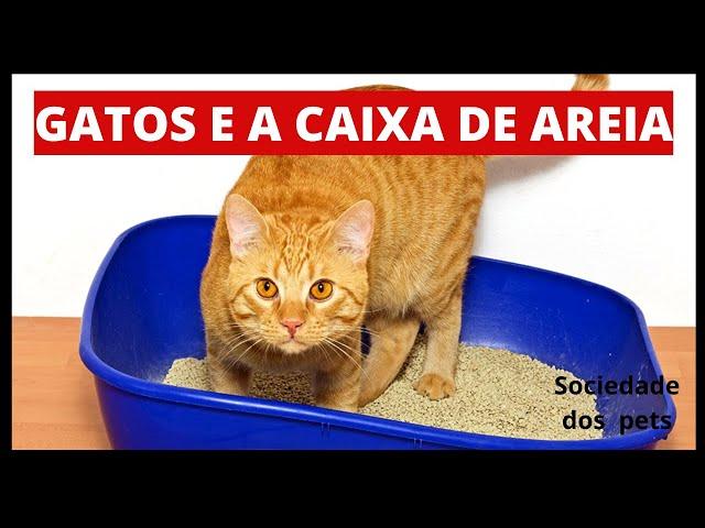 O meu gato não usa a caixa de areia, e agora??(Dicas)  -  Sociedade dos gatos