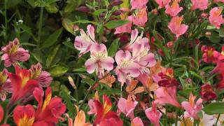Herbaceous Border Design and Color
