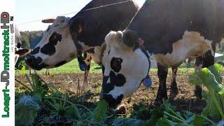 Du Plaisir pour nos Vaches & de l'Energie pour notre ration !