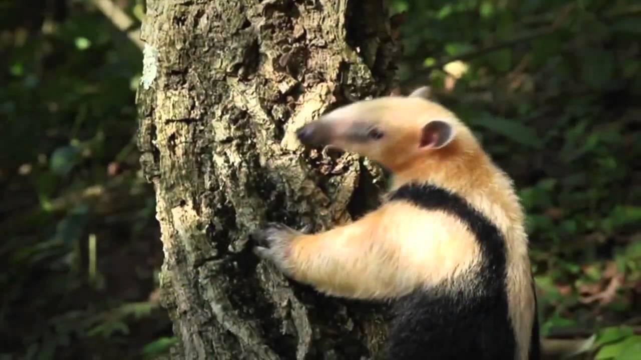 amazon rainforest facts YouTube