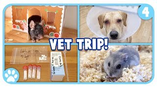 Going To The Vet, Mouse Playtime + Mini Q&A! || Vlogstice Day 4