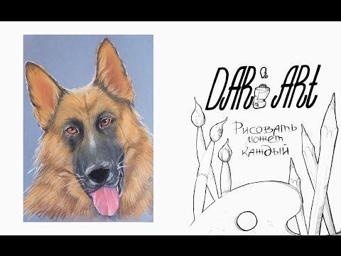 Как нарисовать овчарку пастелью! #Dari_Art