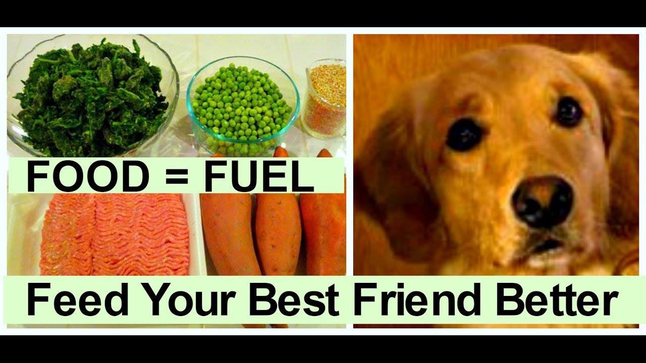 Dog food secrets healthy pet food homemade dog food recipes for a dog food secrets healthy pet food homemade dog food recipes for a balanced diet forumfinder Image collections