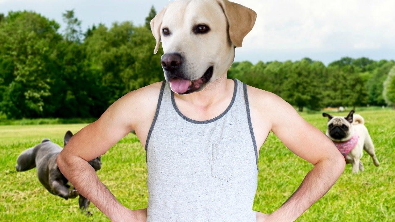 Si yo fuera un perro... | What Dog - JuegaGerman - YouTube