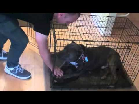 Learn To Train The Good Dog Way: The Crate