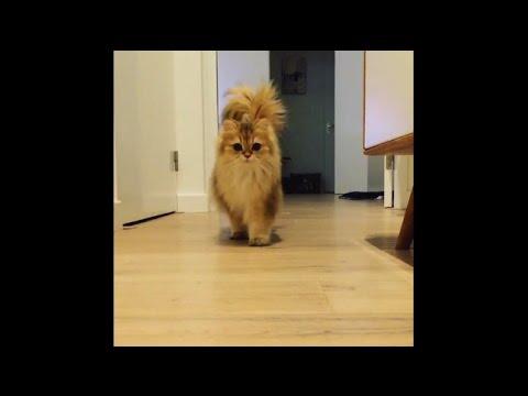 Cat Running Floof Compilation - Smoothie & Milkshake