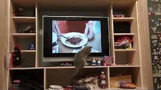 Котенок и телевизор