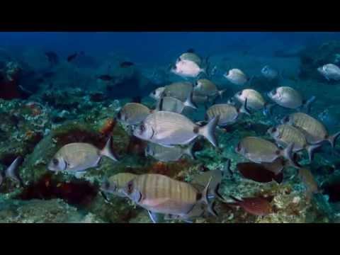 Zafer Kazilkaya - Turkey's first community managed marine protected area