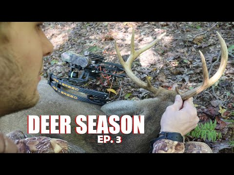 MARYLAND HANG And HUNT ARCHERY SUCCESS!!!!! - PUBLIC LAND BOWHUNTING 2020 - TARGETING BUCK BEDDING