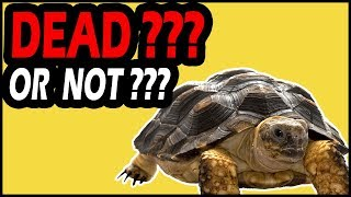 How to Know if Your Turtle Is Dead?