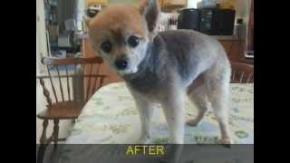 Pet Grooming Mobile At Home Grooming