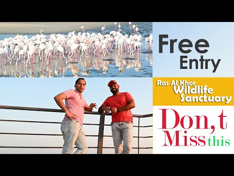 Don't Miss This | Ras Al Khor Wildlife Sanctuary – Part 1 | Nadeer Khalid | Noufal Salam
