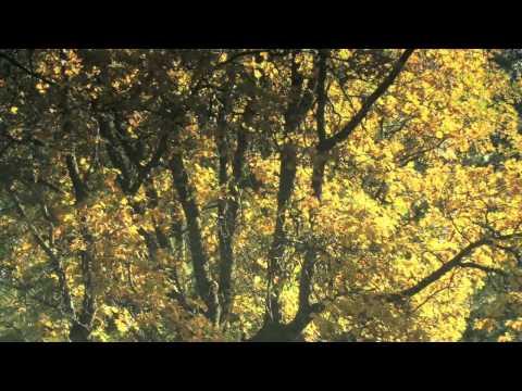 Deep Meditation - Meditation Music (FREE Meditation Music)