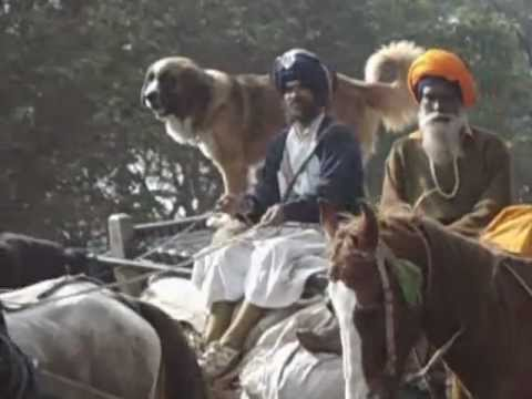 Nihang Baba who always fight for fundamental rights passing to Chandigarh Road Near Banur