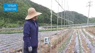 거북농부(마라톤농부)의 봄농사(토마토 지지대 설치) 마…