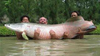 Опаснейшие рыбы Азии. Документальный фильм.