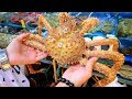 Chinese Street Food - GIANT EXOTIC SEAFOOD Market in Guangzhou, China + BEST Street Food in China
