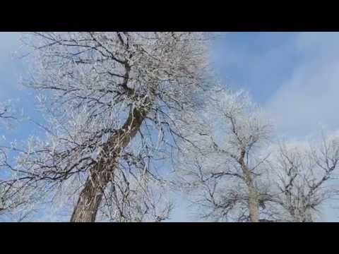 Winnipeg Sun, melts the frost off the trees and makes it look like snow!