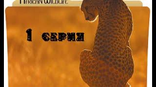 Удивительная природа Африки 1 серия