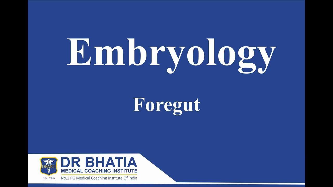Anatomy - Embryology (Foregut) - YouTube