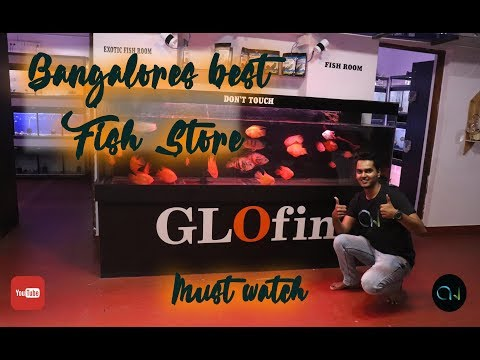 BANGALORE'S BEST FISH STORE | GLOFIN NATURE AQUARIUM GALLERY
