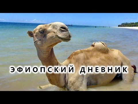 Момбаса: верблюды на пляже, рыбаки и канаты надежды - Эфиопский дневник №10