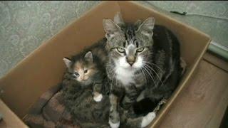 Кошки и котята. Cats and kittens