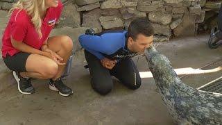 Marine mammal training is a popular field